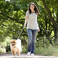 Trustworthy, Quiet House Sitter Dog/Cat Sitter