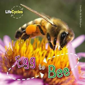 Egg to Bee (Qed Life Cycles)