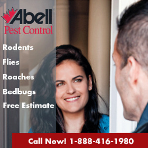 Guaranteed Pest Control Services for Windsor/226-773-7088 Windsor Region Ontario image 2