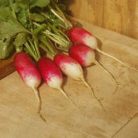 Radish – French Breakfast – Tray of 20 for £1.00