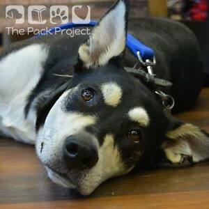 Roxy is ready to be adopted and looking for her forever home Regina Regina Area image 1