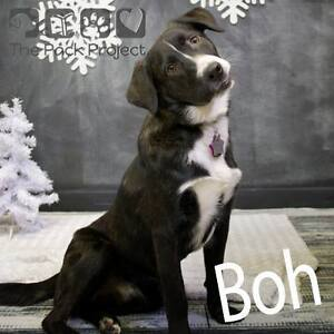 Boh is looking for his forever home and ready to be adopted