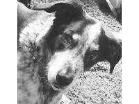 Charlie's Dog Walking Service - Leeds