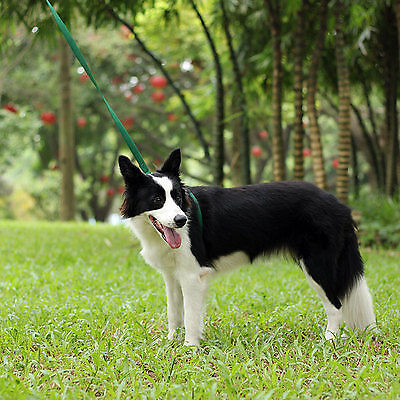 What Do I Need To Start A Dog Walking Business