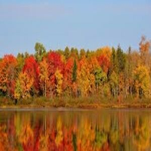 FALL IN ALGONQUIN COTTAGE RENTAL