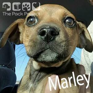 Marley is looking for her forever home She's ready to be adopted