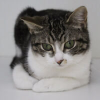 Cat Rescue! Adoption Counselors Needed!!