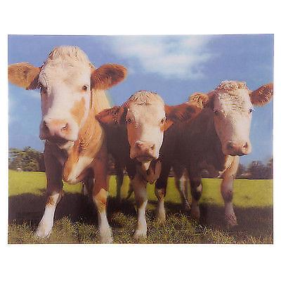 3D Bild Kühe 29 x 39,5 cm