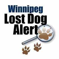 Winnipeg Lost Dog Alert for lost and found pups