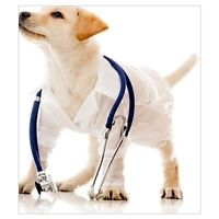 Veterinary Assistant/ Receptionist