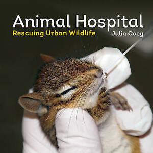 Animal Hospital: Rescuing Urban Wildlife by Coey, Julia -Paperback