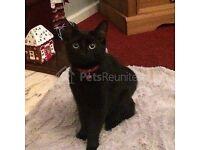 Lost Black Cat Kimberworth/Rotherham S61