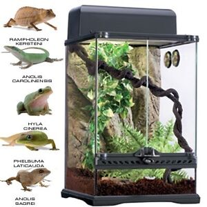 NEW - Exo Terra Terrarium Kit