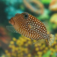 Aquarium Arc En CIel, New Saltwater Fish Arrival
