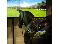 Free Horse Riding Lessons on state of the art Simulator for Non-Riders