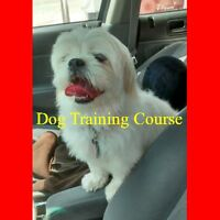 Dog Training Course | pets > animal, pet services