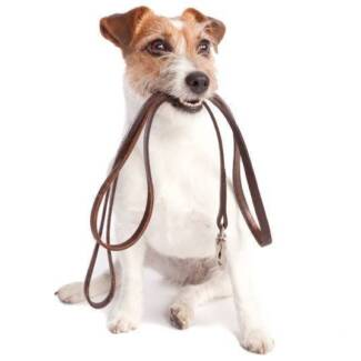 Dog Walking and Caring - Noosa Area