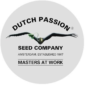 ***WORLD FAMOUS***. DUTCH PASSION SOUVENIRS FOR SALE