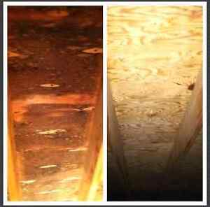 Certified Mold/ Mould Remediation 705 313 6321 Peterborough Peterborough Area image 2