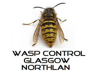 Wasp Control Glasgow / NorthLan (price from £35) provide professional pest & wasp control services