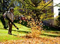 FALL CLEAN UP! EVERY WHERE IN EDMONTON