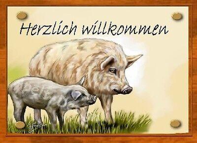 Schwein /  Wollschwein   / Ferkel   /   Schild  / Bild  / B33