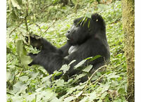 Gorilla Trekking Safaris with the African Specialists
