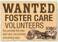 Foster Homes Needed for Rescued Kittens and Cats