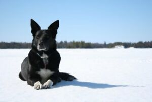 Missing Dog, Oxtongue Lake