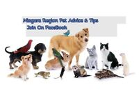 Niagara Region Pet Advice and Tips