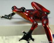 Cotterill Frog