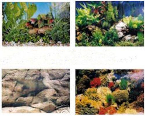 20 Gallon Aquarium Background Ebay