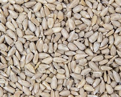 5kg Premium Sunflower Hearts - Bakery Grade Kernels for Wild Bird Food Seeds