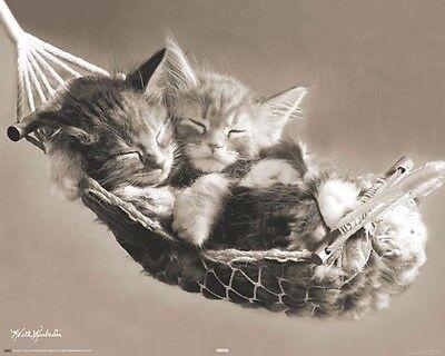 in hammock Kätzchen in Hängematte (Kätzchen Poster)