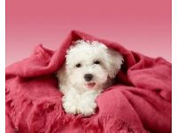 Professional dog grooming Salon. Qualified and experienced groomer.