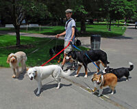 Walking service of your dog