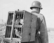 Pigeon Carrier