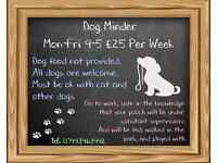Dog Minder - £35 per week - All Dogs Over 2 yrs Welcome!