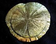Pyritsonne