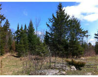 18 Acre Lot for Sale near Cobden Ontario