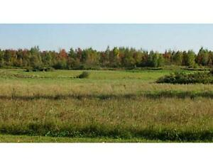 50 Acres of land for sale in Oxford Mills!