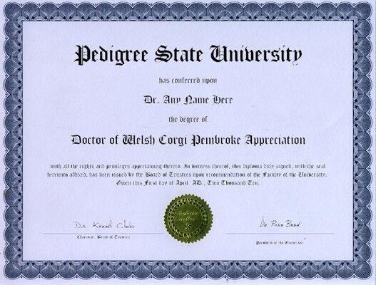 Doctor Guinea Pig Appreciation Novelty Diploma Gag Gift Joke