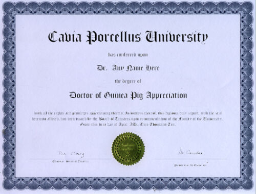 Doctor Guinea Pig Appreciation Novelty Diploma Gag Gift
