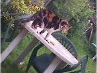 *MISSING CAT*