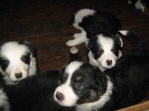 Sweet Puppies for new homes