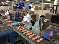 25 LIGHT CHOCOLATE PACKING JOBS AVAILABLE - DAY SHIFT