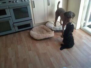 In-Home Dog Boarding Available in Essex County