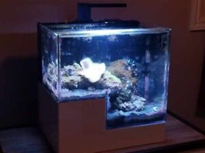 Acrylic high end healthy & thriving salt water fish tank