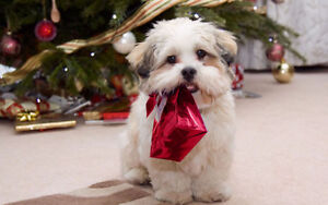 SHAKE A PAW DOG GROOMING.Save 20%off your current groomer's bill