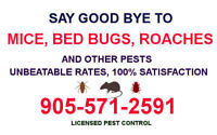 100% PEST CONTROL. MOUSE, RAT, ROACH, BED BUG RMVL 905.571.2591